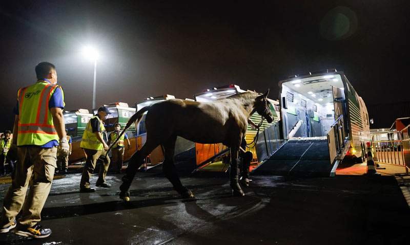 After some 18 hours in the air, the horses were taken by transporters to their Olympic equine village.