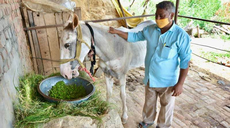 Suresh, pictured with his horse, is one of the owners whom Brooke has helped. He has been able to build an Azolla pit to cultivate animal feed.