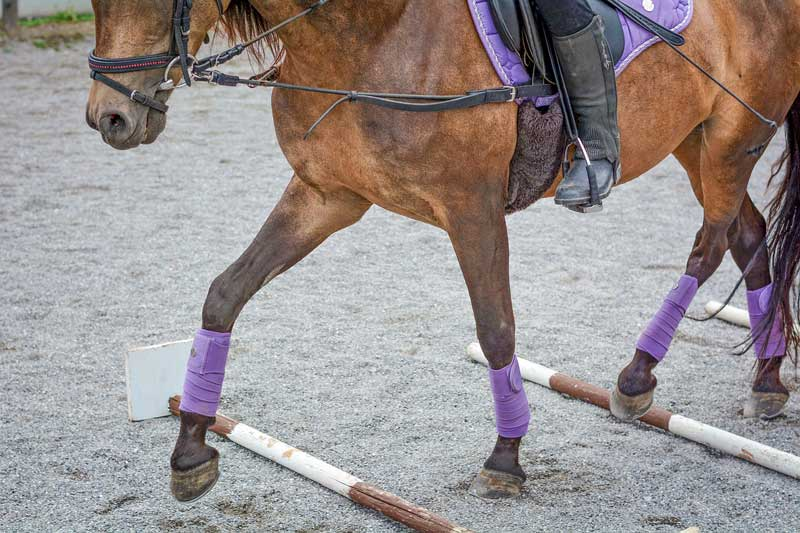 In the study, most of the individuals attached the auxiliary reins only after the warm-up phase, but half the participants did not change them during the entire training session.