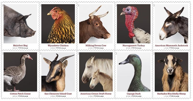 """The US Postal Service's latest set of """"forever"""" stamps features two rare equine breeds -- the Cream Draft Horse and the Mammoth Jackstock."""