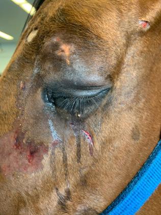 Camino Del Paraiso's initial injury.