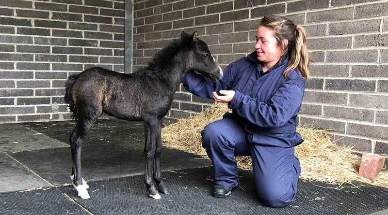 Duke was rescued as a foal in May 2020.