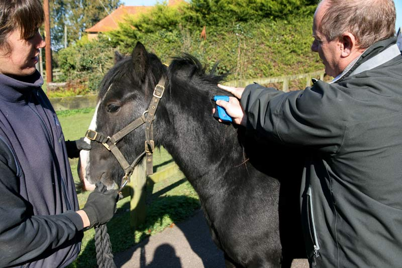 """The introduction of microchipping for all equines was """"a fantastic step forward"""", says World Horse Welfare's Roly Owers, """"but the legislation did not go far enough."""""""