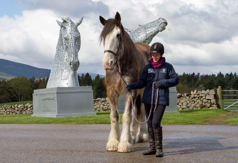 World Horse Welfare's Digger, pictured with two maquettes of Scotland's famous Kelpies, the world's largest equine sculptures. The charity is urging the public in Wales and Scotland to contact their Members of Parliament to encourage them to support several proposed laws.