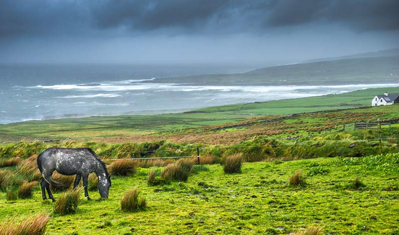 The first annual census of equines in Ireland is scheduled to take place at the end of the year.