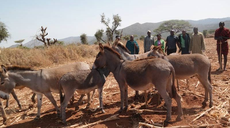 A group of donkeys found in a remote location by anti-poaching officers.