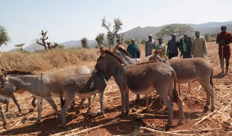 A group of donkeys found in a remote location by border guards,