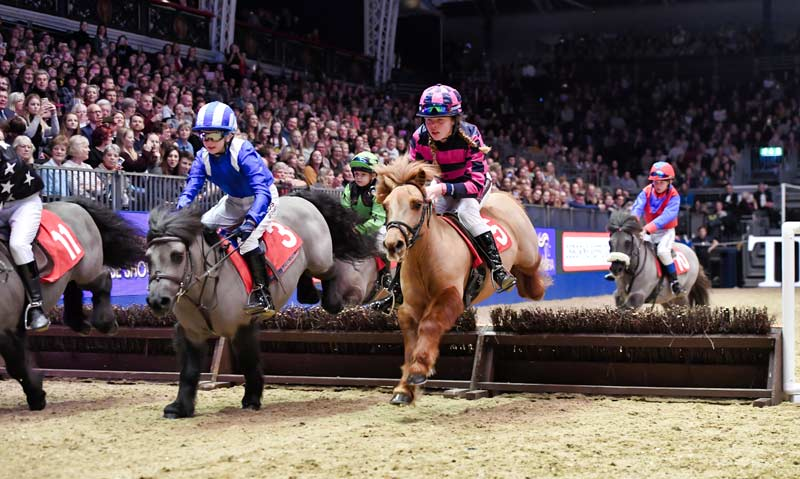 The Shetland Grand National is one of the highlights of the London International Horse Show.