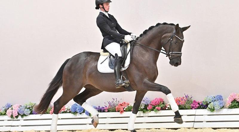 Superb (Secret/Welt Hit II/Landadel) sold for €450,500 star at the 95th Fall Elite Auction at the Oldenburg Horse Centre in Vechta.