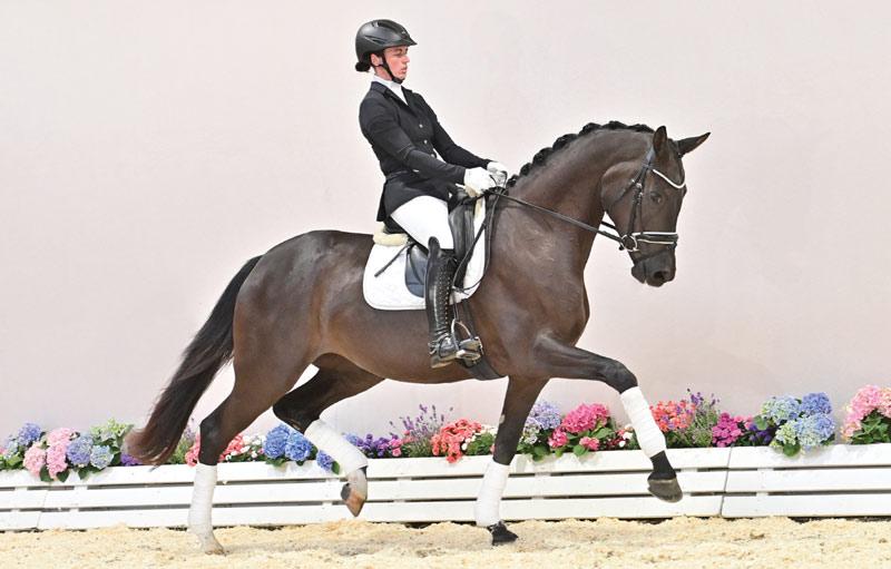 Superb (Secret/Welt Hit II/Landadel) sold for €450,500 at the 95th Fall Elite Auction at the Oldenburg Horse Centre in Vechta.