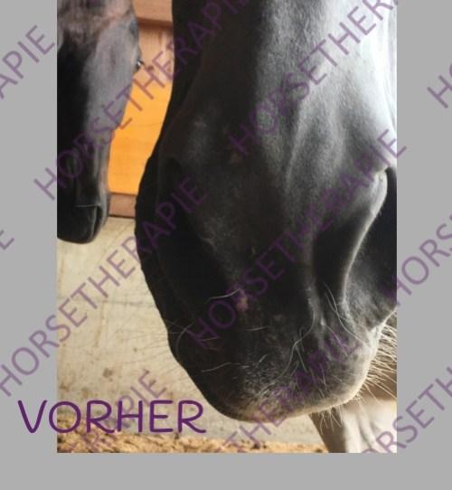 Craniosacral - Pferd mit einseitiger Gesichtslähmung