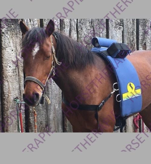 Equissage - Pferd während Equissage Behandlung