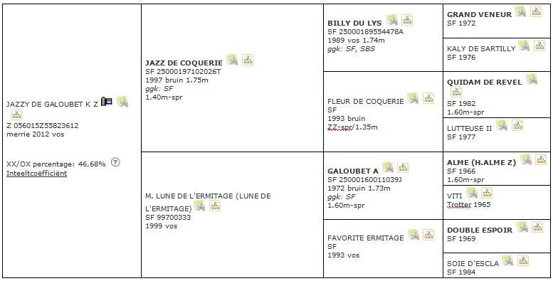 Jazzy de Galoubet K Z