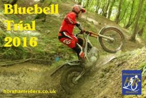 bluebell16s