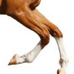 glucosamine voor een soepele beweging van je paard