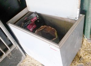 Ratten op stal voorkomen met voer in voerkist