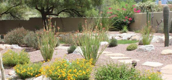 tucson landscaping services horticulture