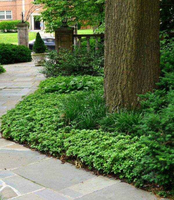 mulch alternatives trees