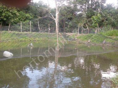 GUACAMALLAS malla anti-aves sobre estanque para acuicultura