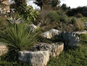 Rocaille de xérophytes
