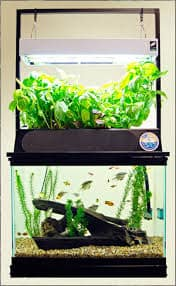ECO Cycle Aquaponics