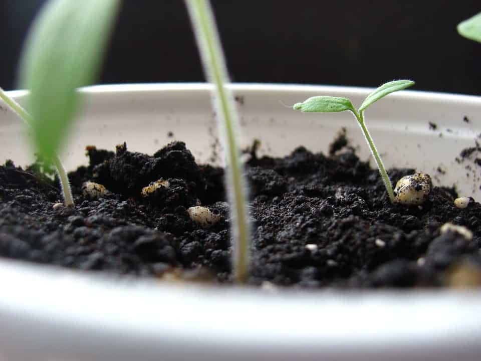 Garden soil supports vigorous plant growth