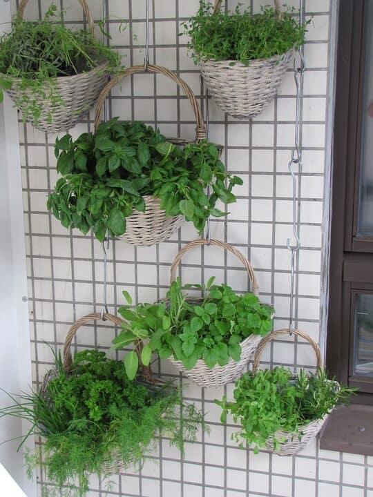 Planting vegetables for beginners in a vertical garden