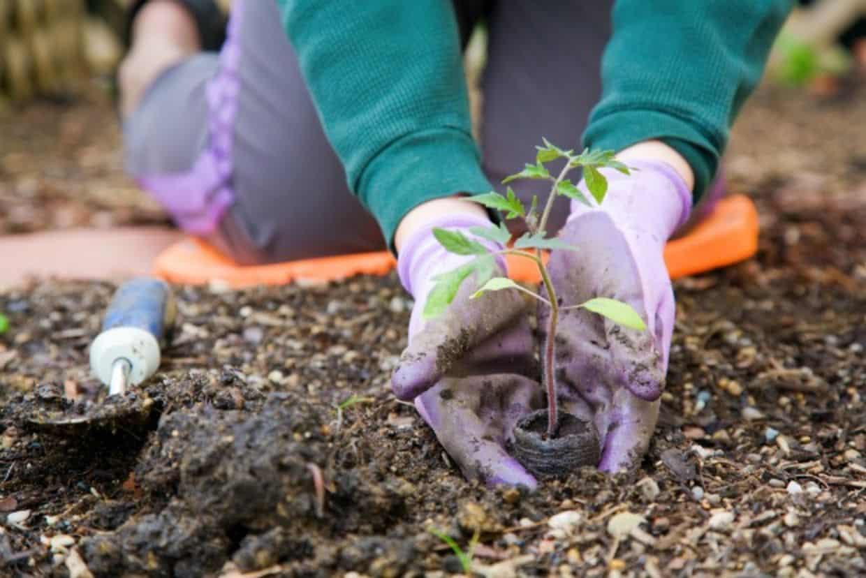 How to prepare your garden