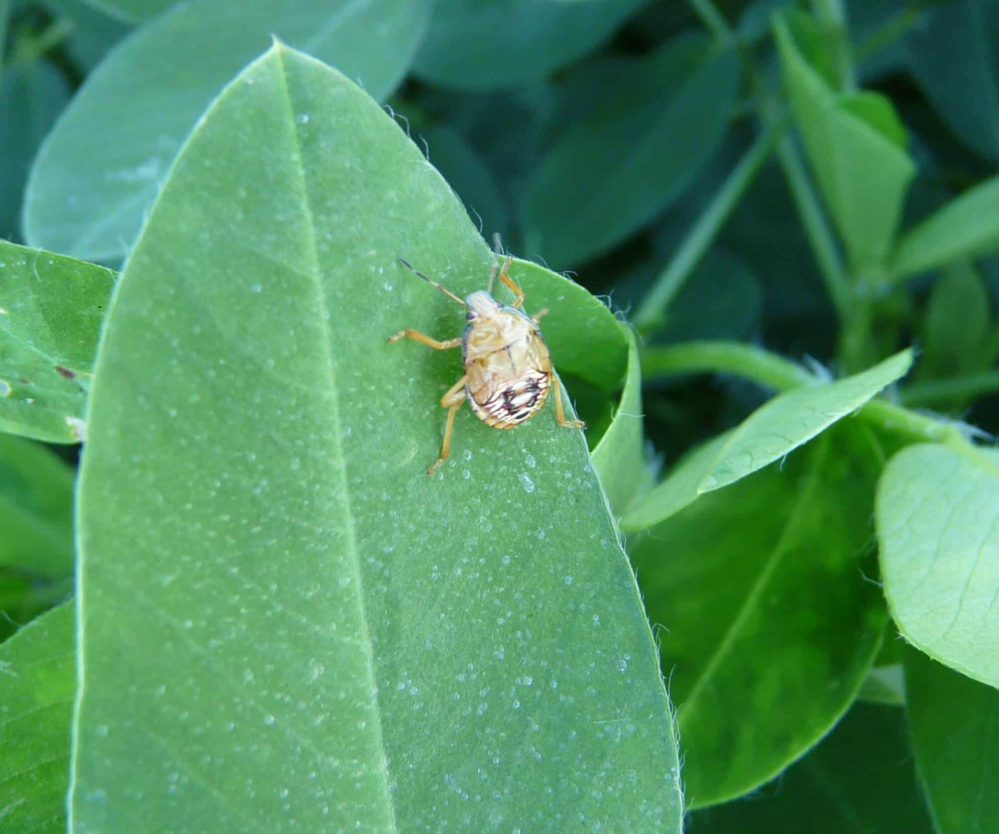 12 Plants That Attract Ruthless Good Bugs
