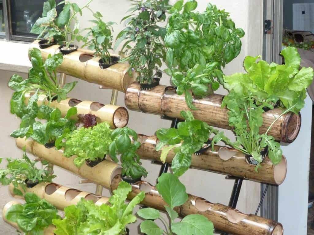 13 Easy to Grow Vertical Garden Plants