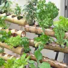 13 Easy to Grow Vertical Garden Plants