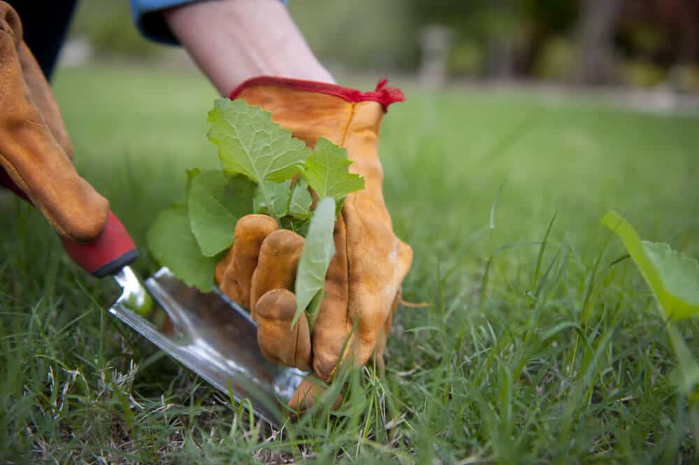 17+ Best Glyphosate Alternatives (As Voted by the Gardening Community)