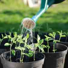 How to Improve Drainage in Potted Plants Featured