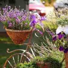 7 Easy Steps in Growing Lavender in Pots
