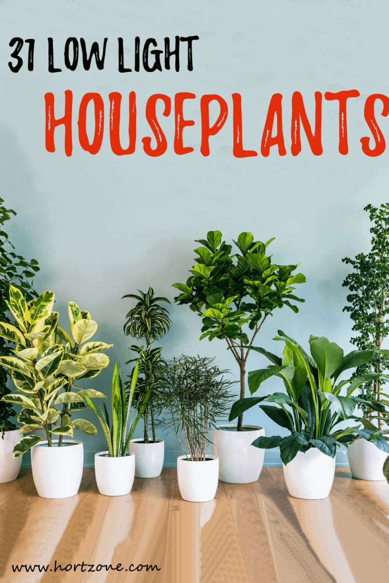 31 Low Light Houseplants That You Shouldn T Miss Out Hort Zone