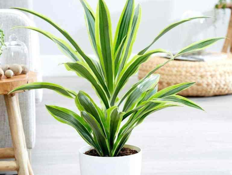 19 Bathroom Plants that Absorb Moisture