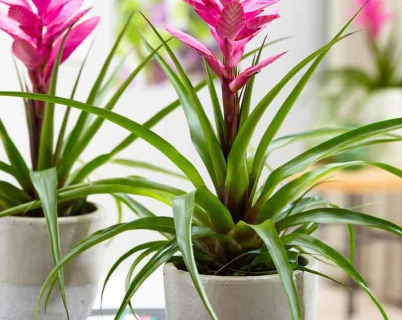 19 Bathroom Plants that Absorb Moisture
