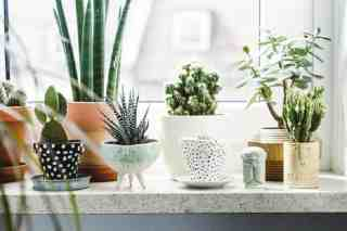 13+ Best Indoor Pot Planters for Home Decoration