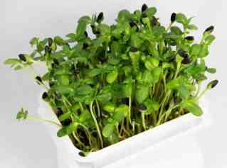 microgreens growing course