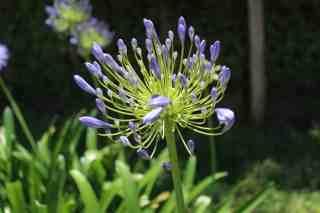 13 Best Drought Resistant Plants for your Garden