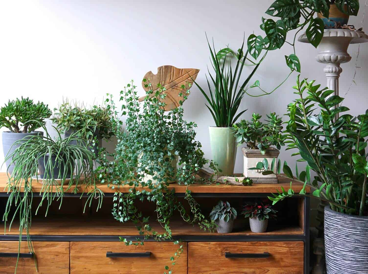 17 Indoor Vine Plants for The Ultimate Jungle Vibe