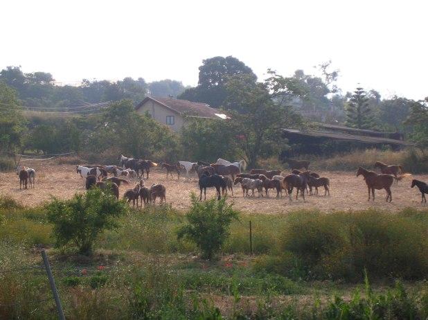 חוות סוסים בצפורי