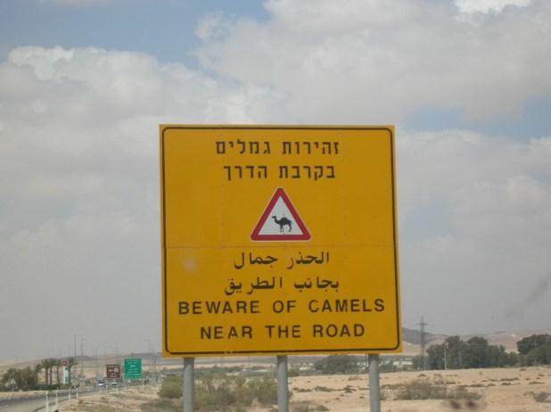 זהירות גמלים!