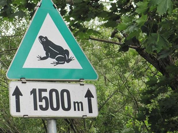 זהירות צפרדעים - שלט אמיתי בעיר וויידהופן, אוסטריה