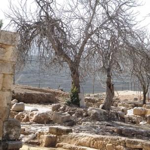 תאנה עתיקה ליד גיאמע אל יתים