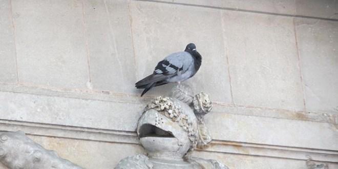 חלונות ראווה בברצלונה