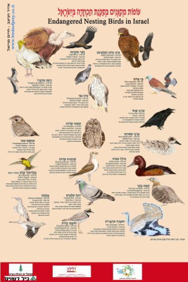 עופות מקננים בסכנה בישראל