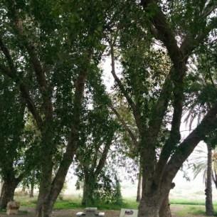 חניון הטמפלרים ליד שדה אליהו