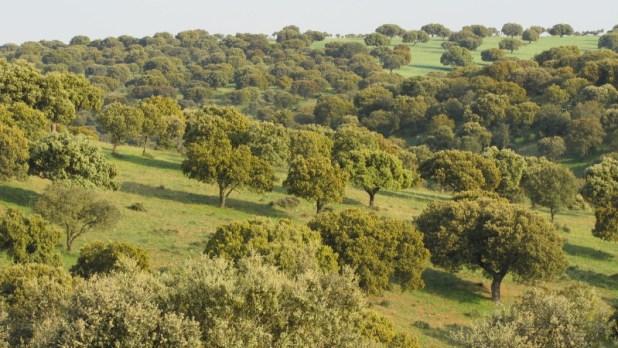 יער פארקי צילום:Pravdaverita