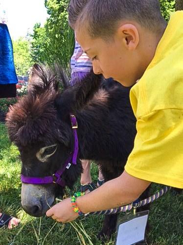 TBG Donkey Close Up